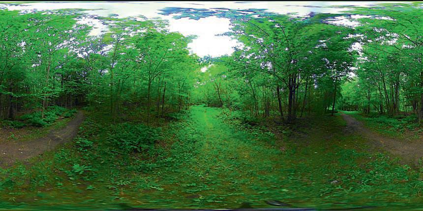 Καναδικό δάσος σε ΕΠ.