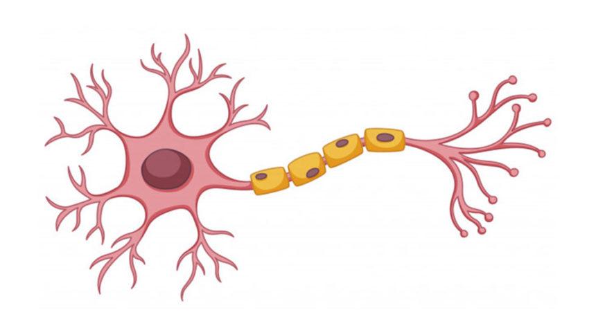 Βλαστοκύτταρα και Οδοντιατρική