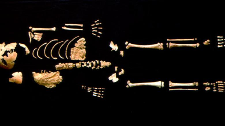 Αρχαία οδοντοστοιχία ρίχνει φως στην ανθρώπινη εξέλιξη